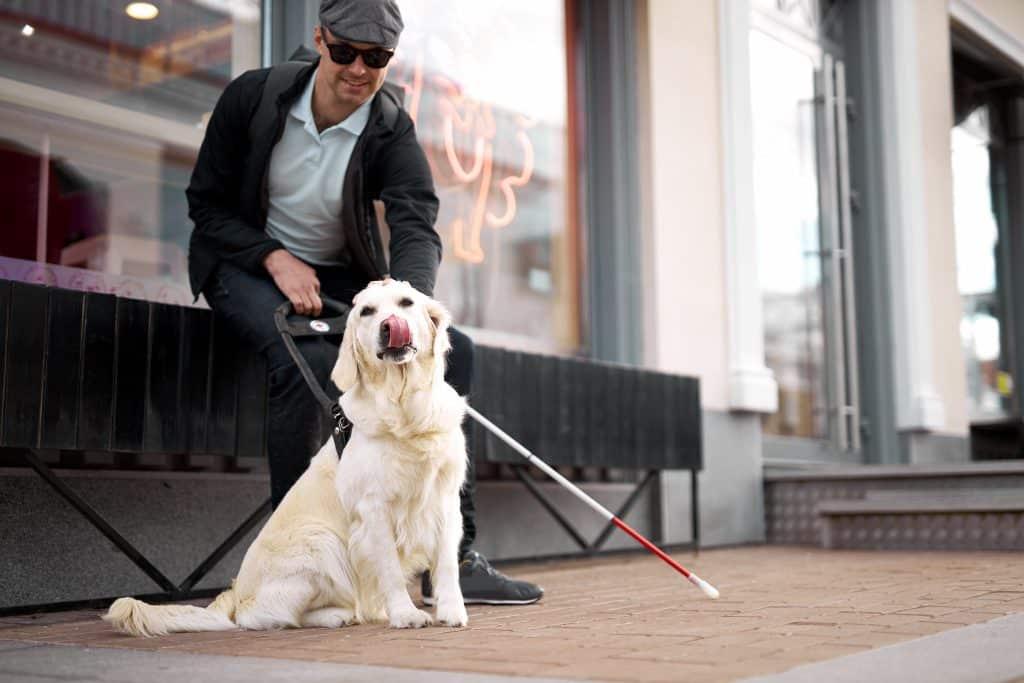 segítő kutya
