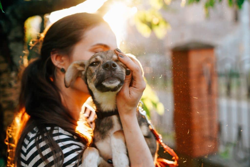 Volunteer,holding,homeless,dog,in,beautiful,sunset,light.