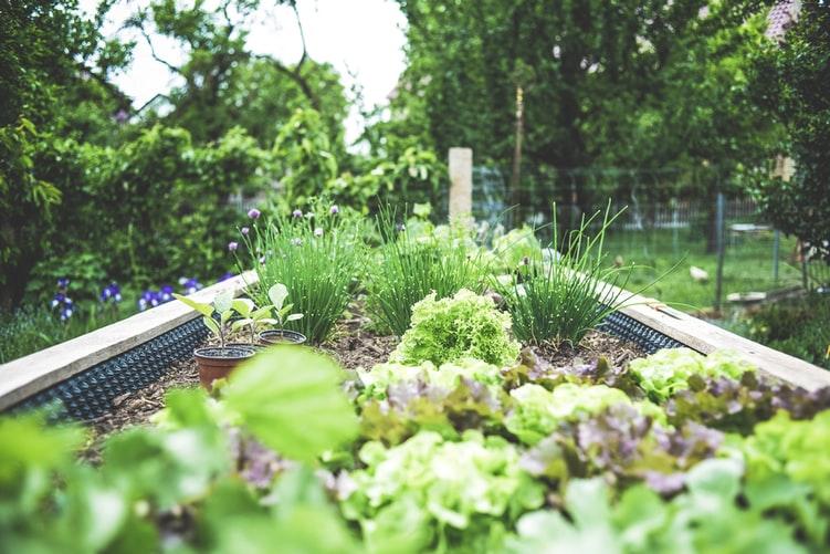 kert, munkák, termés