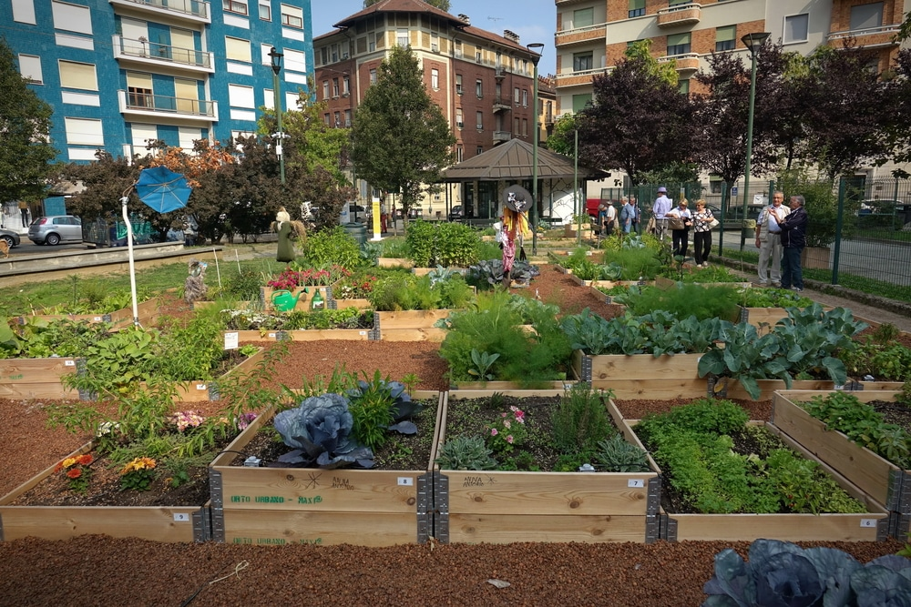 Urban,horticulture, ,community,garden,in,central,square,of,the