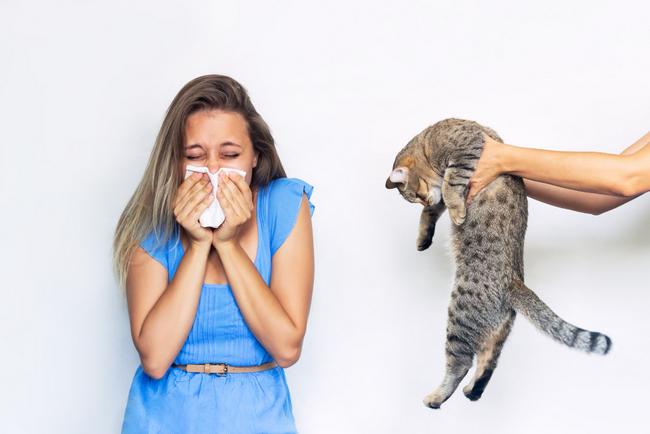 Allergia (2)