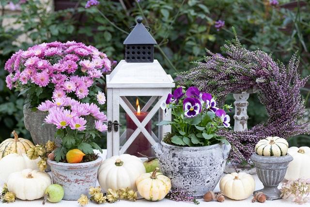 Balkonnövények