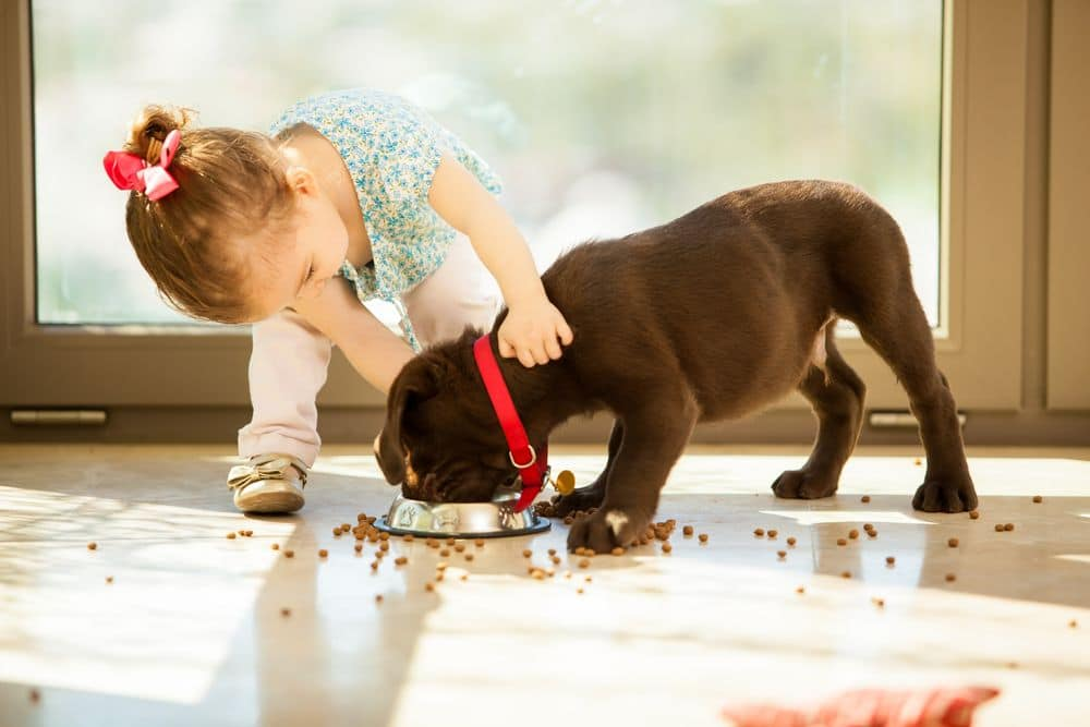 Beautiful,little,girl,watching,her,puppy,eat,in,the,living