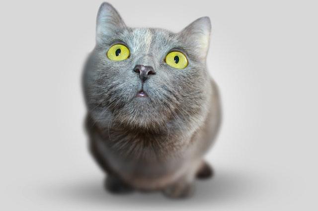 Macska néz