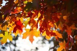 október, ősz, falevelek, narancssárga