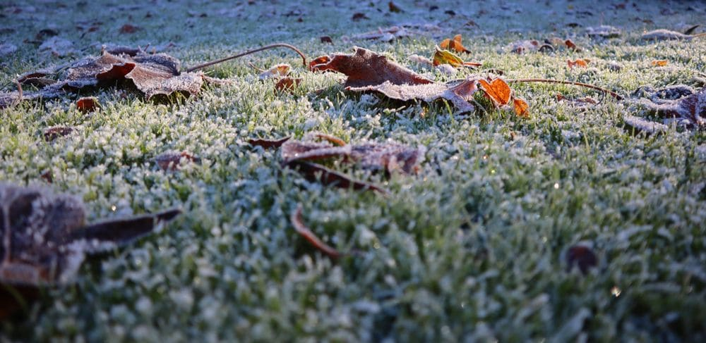 Frost,on,leaves,in,an,english,garden,on,a,cold